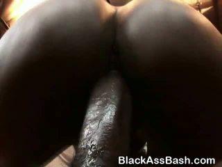 gojor, black / ebony, amator
