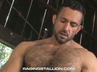 gay stud jerk, gay studs blowjobs, sex gay big man, bears, gay hunks pictures, hung big stud dick