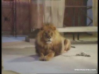 Svart widow, den roman och den lion
